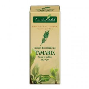 Extract din mladite de catina rosie (TAMARIX GALLICA)