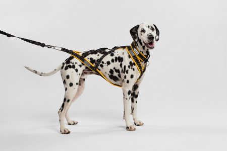 Inuit harness - for medium dogs (M, L, XL)