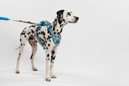 Spartan harness for medium and large dogs (M, L)