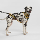 Inuit harness - for medium dogs