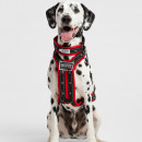 Seppala harness - for medium dogs (M, L)