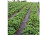 Agrotekstil folija - prostirka za zemlju 1.05 x 100m
