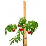 Kolčići - štapovi za paradajz 180cm - 10kom.