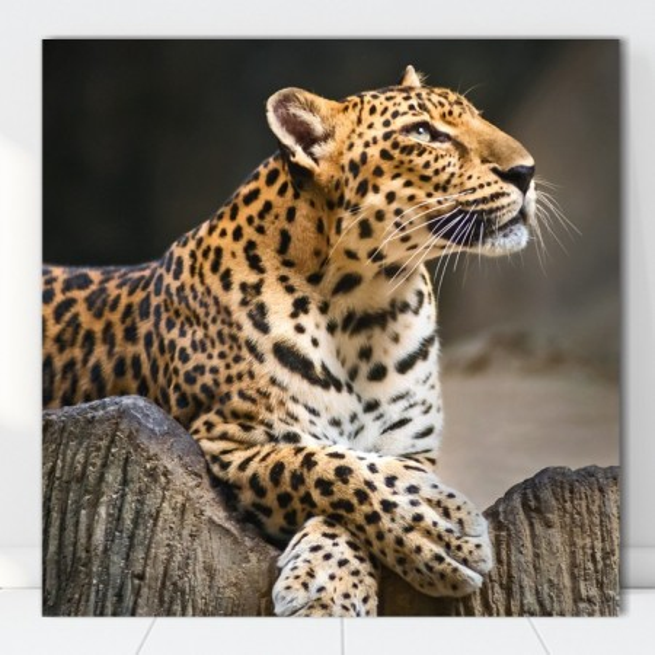 Tablou Canvas Leopard ATGR82