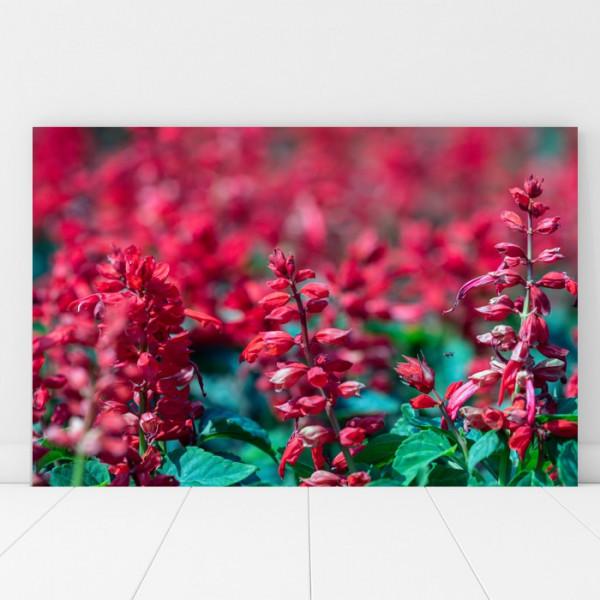 Tablou Canvas Salvie, Floare de Gradina AAG38