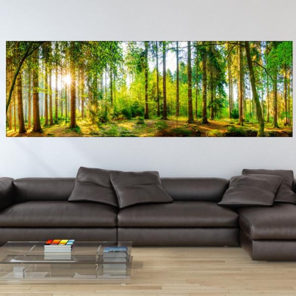 Tablou Canvas Raze Printre Trunchiuri de Copaci PFJ62