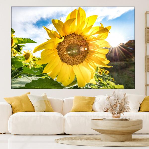 Tablou Canvas Floarea Soarelui SFW22