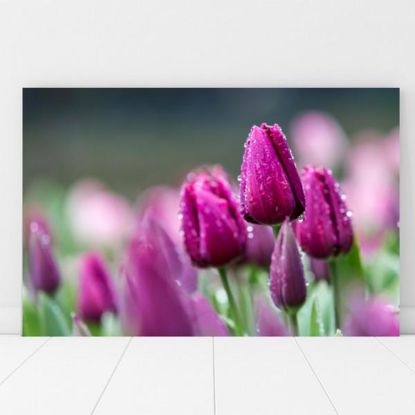Tablou Canvas Lalele Violet dupa Ploaie AAG44