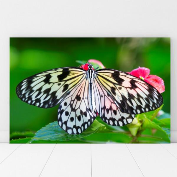 Tablou Canvas Fluture cu Aripi Mari AAG64