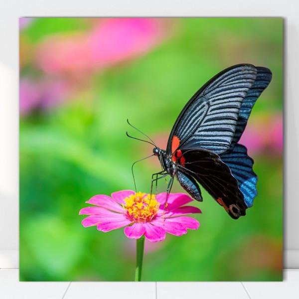 Tablou Canvas Fluture pe Floare Roz AAG72