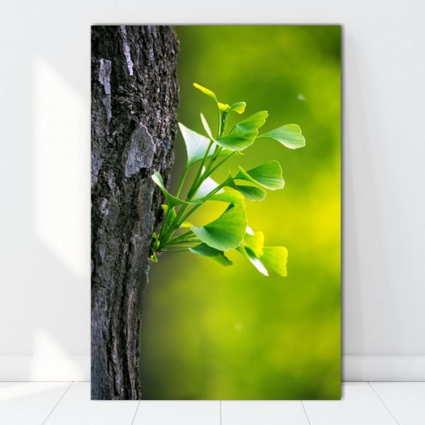 Tablou Canvas Frunze de Ginkgo Biloba AAG76