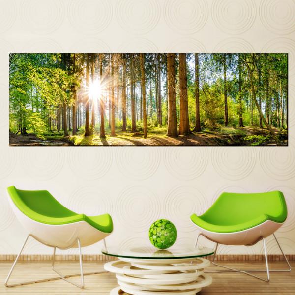 Tablou Canvas Raze de Soare Printre Copaci In Padure Vara PFJ54