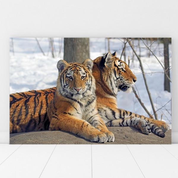 Tablou Canvas Tigri Mama si Puiul AFE4
