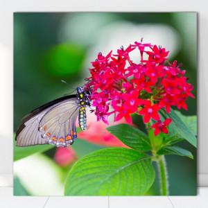 Tablou Canvas Fluture pe Floare AAG73