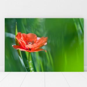 Tablou Canvas Floare de Mac in Fundal Verde RM12