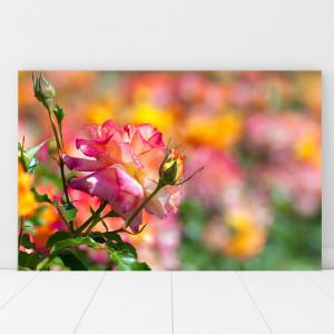 Tablou Canvas Trandafir Inflorit AAG53