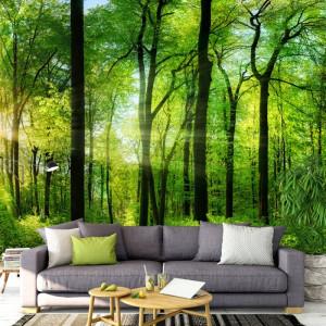 Fototapet 3D Raze De Soare Printre Copaci In Padure PFJ27