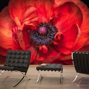 Fototapet Interior Macro Floare Rosie CFB27