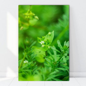 Tablou Canvas Plante Verzi de Primavara AAG15