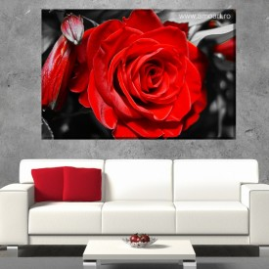 Tablou Canvas Trandafir Rosu BROS1