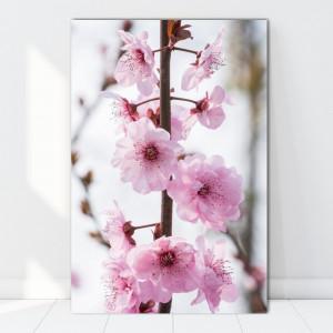 Tablou Canvas Creanga cu Flori de Cires AAG8