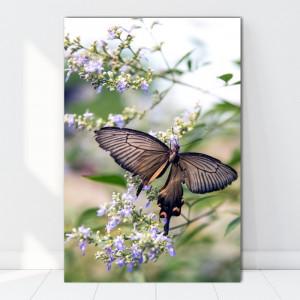 Tablou Canvas Maretia Fluturelui printre Flori AAG14