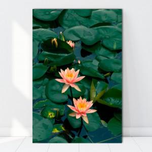 Tablou Canvas Flori de Nuferi AAG32