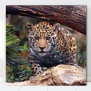 Tablou Canvas Leopard ATGR44