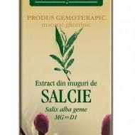 EXTRACT SALCIE  MUGURI 50ML Salix alba gemme MG=D1  PLANTEXTRAKT