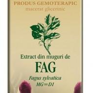 EXTRACT MUGURI FAG 50ML Fagus sylvatica MG=D1 PLANTEXTRAKT