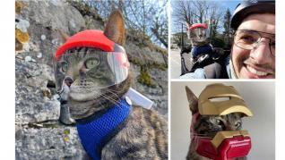Casca personalizata pentru pisica realizata cu imprimanta de birou Zortrax