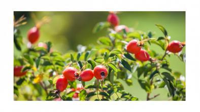 Macesele, vitaminizante redutabile