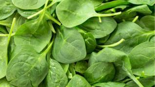 Spanacul una dintre cele mai hrănitoare legume frunzoase