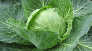 Varza una din cele mai vechi si mai sanatoase legume