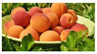 Caisele, fructe bogate în provitamina A