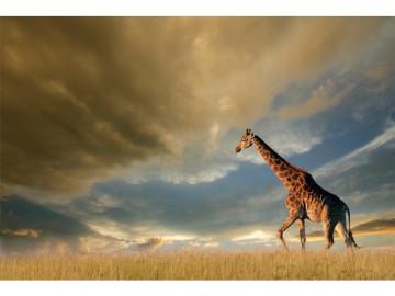Tablou din sticla Giraffe 120 x 80 cm