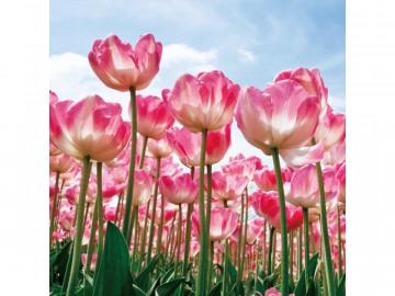 Tablou din sticla Tulips 80X80