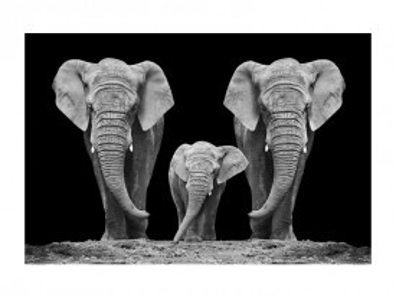 Tablou din sticla Elephant Family 80 x 120 cm