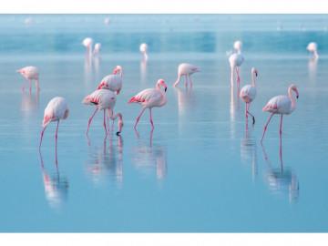 Tablou din sticla Flamingos 120 x 80 cm