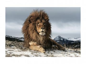 Tablou din sticla Lion 120 x 80 cm