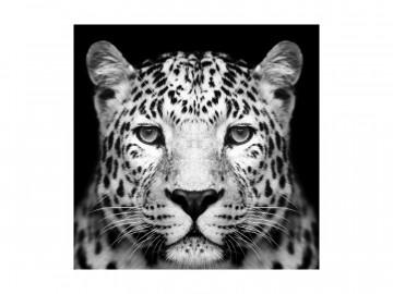 Tablou din sticla Panther 80 x 80 cm