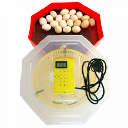 Incubator Cleo Termometru