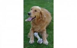 Jucărie câine 24x6,5cm