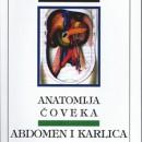 Anatomija Coveka: Abdomen i Karlica