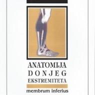 Anatomija donjeg ekstremiteta