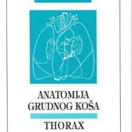 Anatomija Grudnog kosa thorax