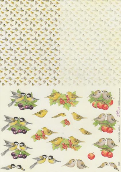 Mireille knipvel vogels E637 (Locatie: 1511)