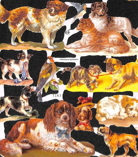 Poezieplaatje Honden MLP7163 (Locatie: MP059)