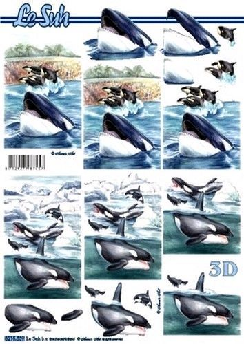 Le Suh knipvel orka 8215539 (Locatie: 5639)