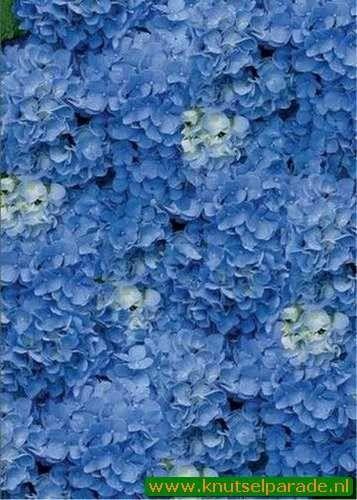 Perkament vellum hortensia blauw 61754 (Locatie: 4412)